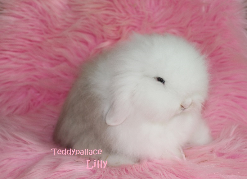 teddy widder Lilly