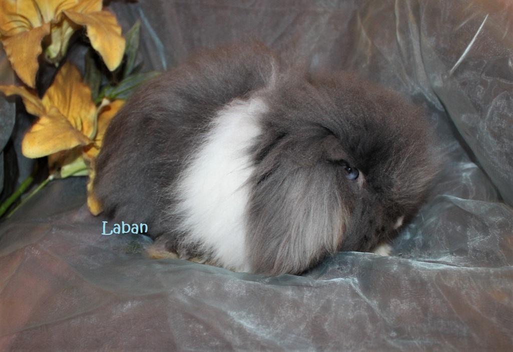 Teddypallace Laban