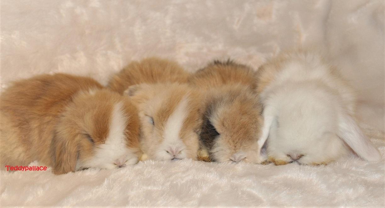 teddy widder babys stacey